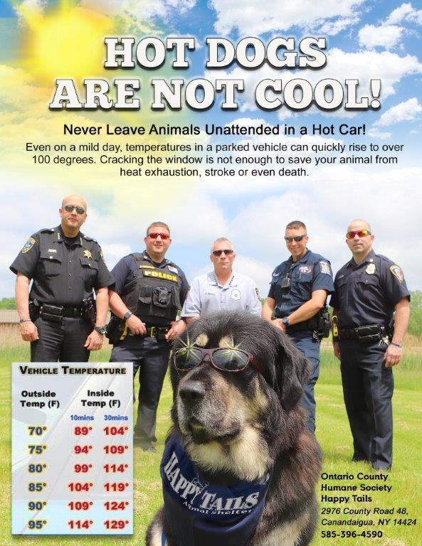 Do not keep your dogs in a car when it is hot outside!