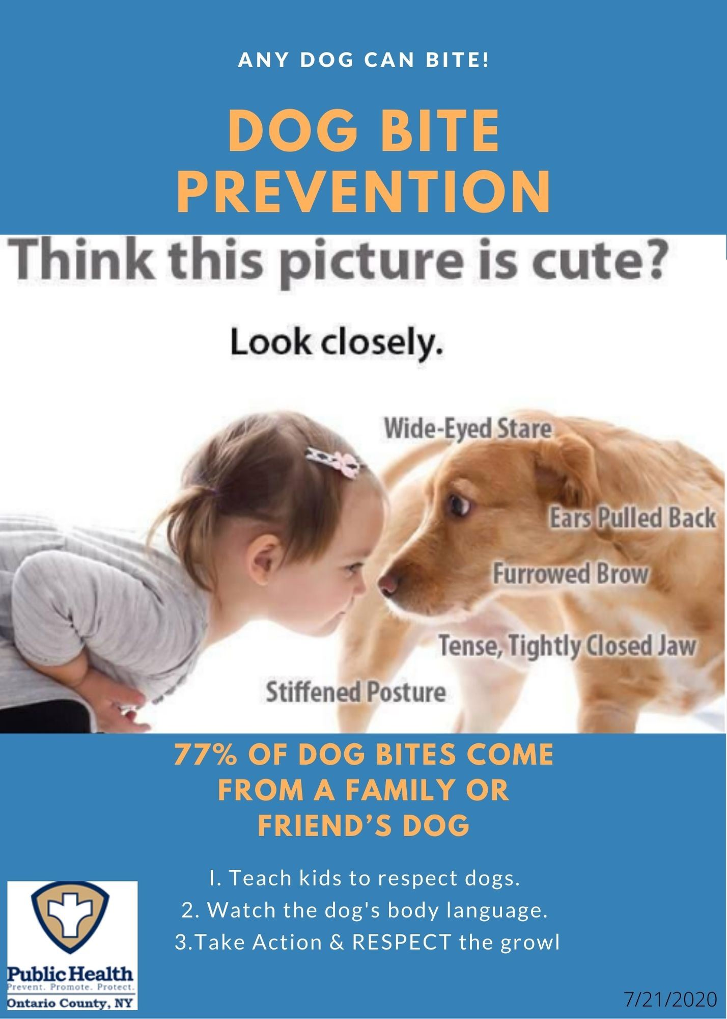 Dog Bite Prevention Flyer (2)