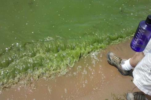 "Blue-Green Algae ""Pea Soup"""