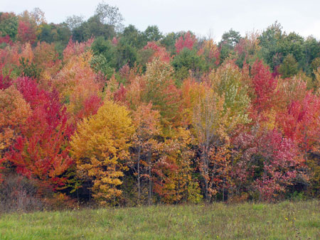 Fall_trees_horz_view_FingerLakes_reds.jpg