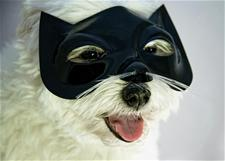 Dog in Cat Mask